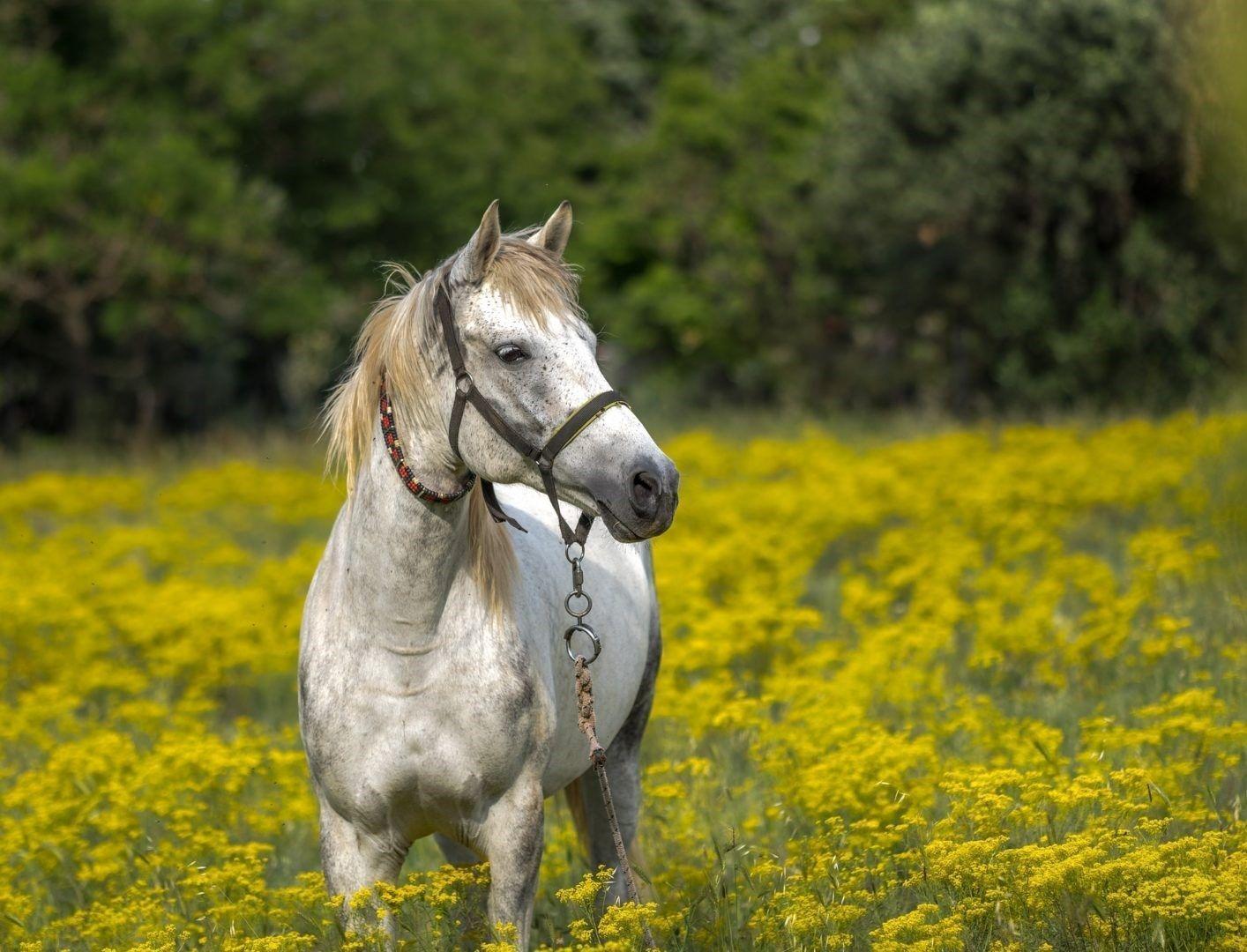 paardrij ongeval